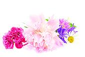 A bouquet of peony, carnation and clover isolated on white background