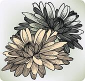 Chrysanthemum flower, hand-drawing. Vector illustration.
