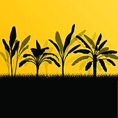 Exotic banana tree plants plantation detailed silhouette landscape illustration background vector