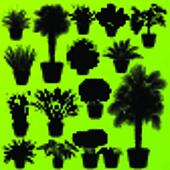 Exotic jungle bushes grass, reed, palm tree wild plants set vector background concept house plants for poster