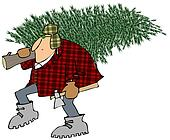 Man carrying home a Christmas tree