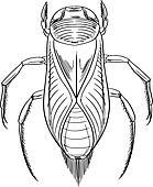 Water beetle outline