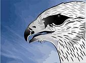 Eagle and blue sky vector